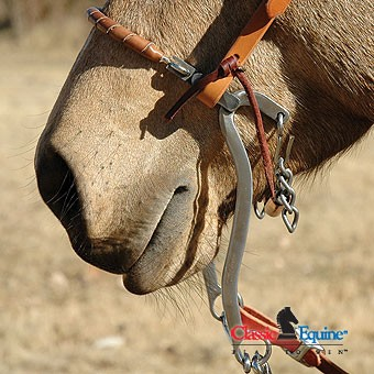 Four of the best bitless bridles Your Horse Magazine